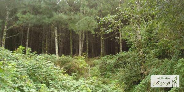 جنگل های سرسبز فریدونکنار، جنگل زاهدکلا، جنگل اوجاکله، جنگل های جزین
