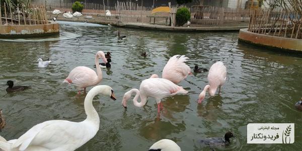 باغ پرندگان فریدونکنار، پرندگان مهاجر، درنای سیبری