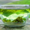 چای سبز و تاثیر آن بر سلامتی
