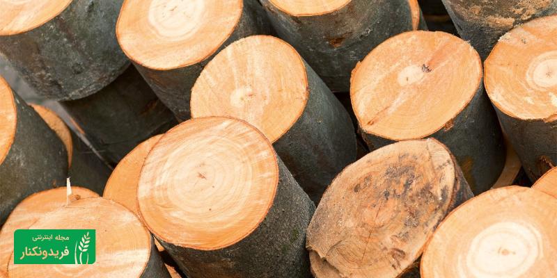 چوب راش و کاربرد های آن